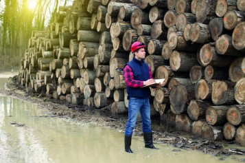 Trees and timber apprenticeship