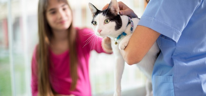 Nursing assistants in a veterinary environment apprenticeship