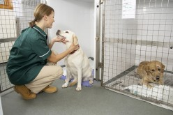 Veterinary nursing apprenticeship