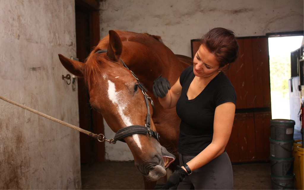 Senior equine groom